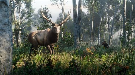 Red Dead Redemption 2 Elk Location Guide | Map Location