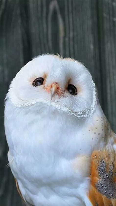 2484 best images about Owls, Eagles & Birds of Prey on