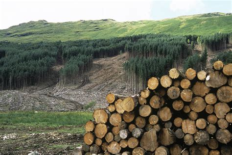 Our Forests Aren't Fuel   NRDC