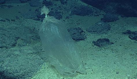 30-Year Observation of Deep Sea Reveals Just How Bad the