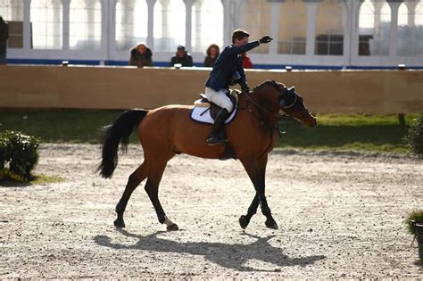 B Sporthorses As - Company - Sylling, Buskerud, Norway